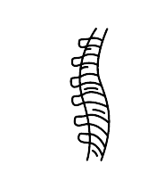 Chiropractor Chiropractic